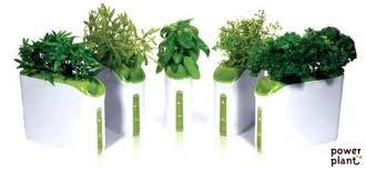 Herb Garden Winter - can you grow an herb garden indoors how to grow an herb garden