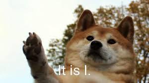 Doge Meme Tumblr - shiba inu dog meme tumblr