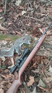 looking for a good accurate but quiet air rifle for hunting