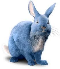 ice cream parlor bar u0026 shop blue bunny