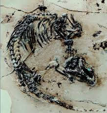 125 million year old fossil reveals early mammalian hair and