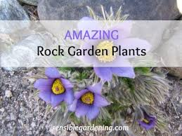 best rock garden plants youtube