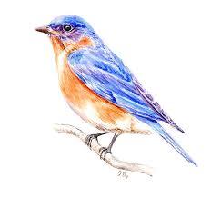 bluebird tattoo design