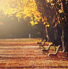 park benches in fall photograph by julia davila lampe