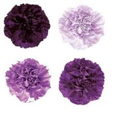 wholesale carnations purple and lavender mixed carnation flower jr roses wholesale