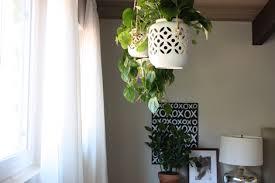 best plants for bedroom enjoy it by elise blaha cripe more hanging plants in the bedroom