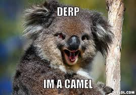 Koala Meme - koala memes google search funny stuff pinterest memes and