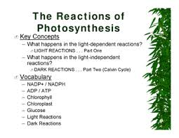 What Happens During The Light Reactions Of Photosynthesis Ninth Grade Lesson Putting The Energy Into Photosynthesis