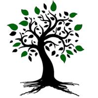 black tree digital solutions web design web development glasgow