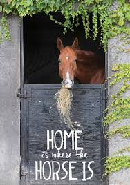 quote home country home is where the horses are horses and all the fun stuff
