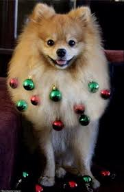 festive pooches who ve for the bauble look this