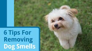 How To Make Your Home Smell Good by How To Get Rid Of Dog Smell Without Removing The Dog Petmd
