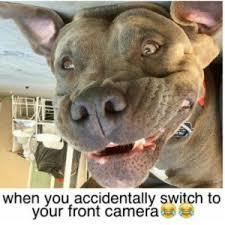 Dog Smiling Meme - 150 best dog memes funny dog memes cute dog meme