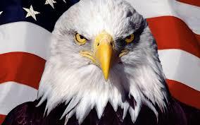 Redneck Flags Flags Usa Bald Eagles Creativity Patriotic Redneck 1920x1200