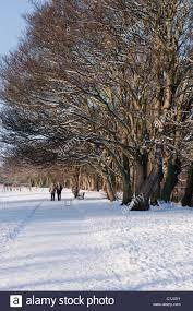 walking under trees in ilkley u0027s riverside gardens park in the