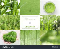 pantone colour of the year 2017 collage greenery color year 2017 pantone stock photo 533267158