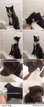 Cat In Bathtub If Human Is In Danger Cat Calls Help Dog Stays With You