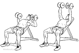 Incline Bench Muscle Group Incline Dumbbell Bench Chest Press Workoutlabs