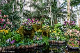 Boothbay Botanical Gardens by Visit The New York Botanical Garden For The Orchid Show Thailand