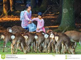 nara deer park the best deer 2017
