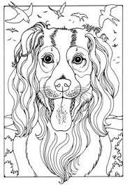 king charles dog patterns davlin publishing adultcoloring