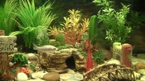best goldfish aquarium w filter food plants ornaments youtube