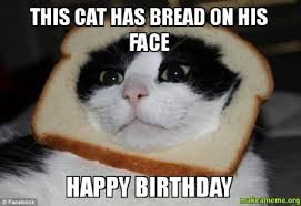 funny happy birthday cat meme 2happybirthday