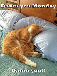 Sleepy Cat Meme - cat memes monday kitty kat pinterest memes mondays and cat