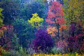 Autumn Colors Gallery U2013 Glacier Ridge Metro Parks Central Ohio Park System