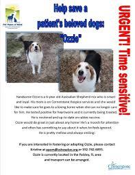 australian shepherd quiz pet peace of mind program helps hospice patients with pets