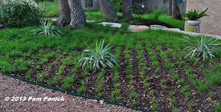 how to plant a sedge lawn diggingdigging