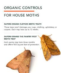 How To Get Rid Of Bed Bugs At Home Clothes Moths Facts How To Get Rid Of Moths