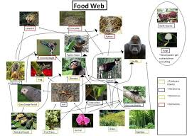 Dominant Plants Of The Tropical Rainforest - alchemistclub rain forest ecosystem