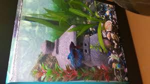 Aquascapes Of Ct I Can U0027t Aquascape Betta Fish And Betta Fish Care