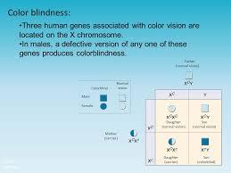 Chromosome Color Blindness Chapter 14 Human Genetics Ppt Download