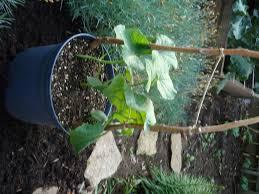 grow something part 2