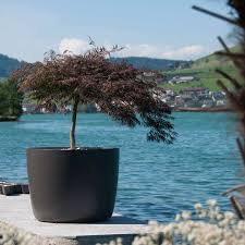 planters bonsai tree plant pots large uk dollar garden isolated