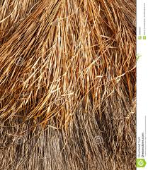Mexican Thatch Roofing by Thatched Roof Background Or Texture Stock Photo Image 39990089