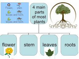 science worksheets for grade 1 plants science worksheets for