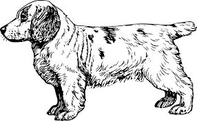 free vector graphic dog pet fur breed spaniel free image
