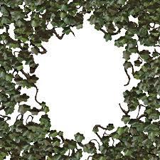 wild ivy climbing plant green v1 by astoko on deviantart