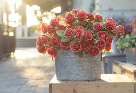 top 10 gardeners tips for epsom salt u2013 westlab usa