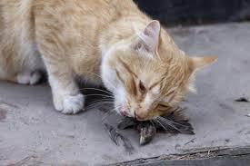 imagenes de animales y cosas 10 cosas raras que hacen los gatos