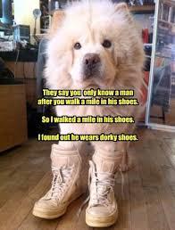Pun Dog Meme - i has a hotdog chow chow funny dog pictures dog memes