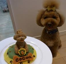 dog birthday cake just a picture of a dog and birthday cake we rule the