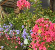 Warren Family Garden Center Whalan U0027s Nurseries S U0026d Pty Ltd Charlestown U0026 Edgeworth Home