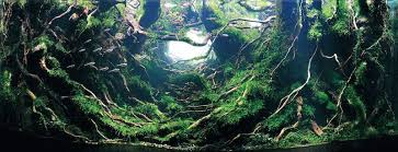 Aquascape Inspiration Top 7 Winners Of The World U0027s Greatest Aquascaping Competition More