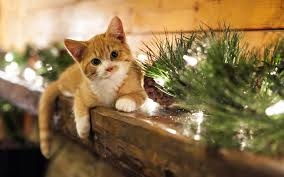 cat christmas cat christmas lights new year 7026211