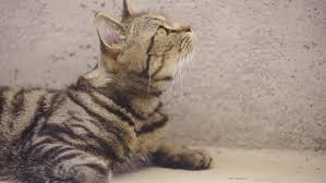 Cats In Small Spaces Video - calm cat lying inside concrete prison looking up 4k cute cat with