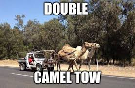 Camel Memes - double camel toe funny pictures quotes memes funny images